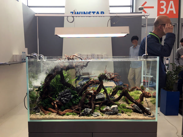 Aquascape design with wood, plants, and twinstar lighting