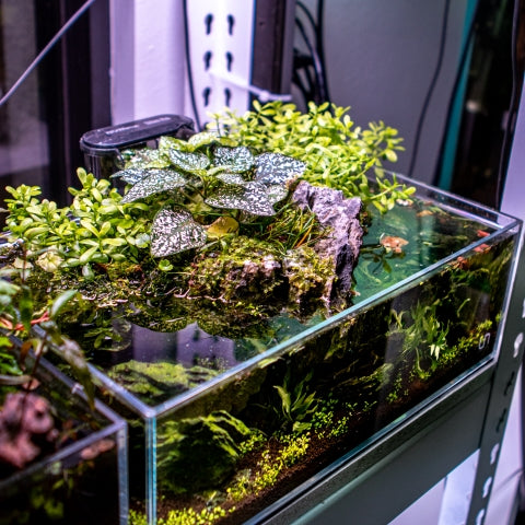 planted aquarium emersed