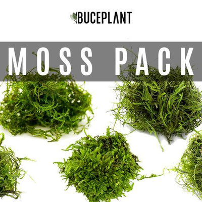Aquarium Moss Collector Pack