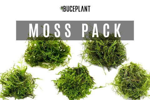 Aquatic Plant 1 Pack The Moss Collector's Pack
