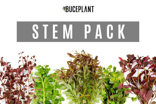 Aquatic Plant Stem Plant Dutch Pack