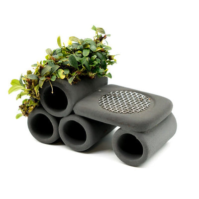 Bucephalandra Shrimp Tunnel Decor