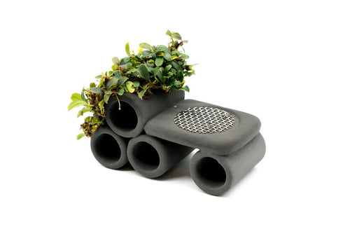 Bucephalandra Shrimp Tunnel Decor - BucePlant.com