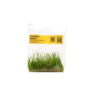 Eleocharis Parvulus Hair Grass TC Bag - BucePlant.com