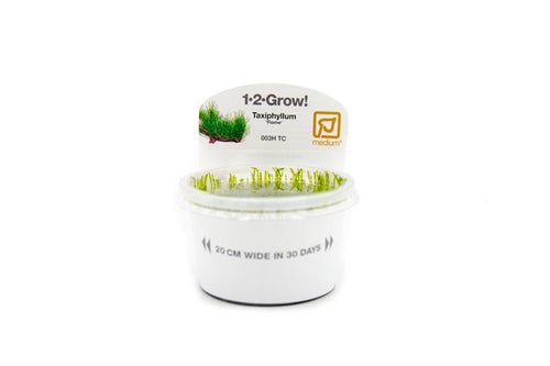 Flame Moss Tropica 1-2-Grow! Tissue Culture
