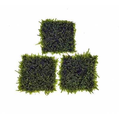 Mini Christmas Moss on Stainless Steel - BucePlant.com