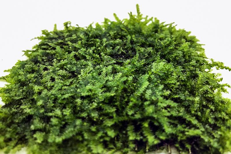 Mini Christmas Moss on Stainless Steel