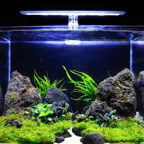 Mini Christmas Moss Aquarium Plant