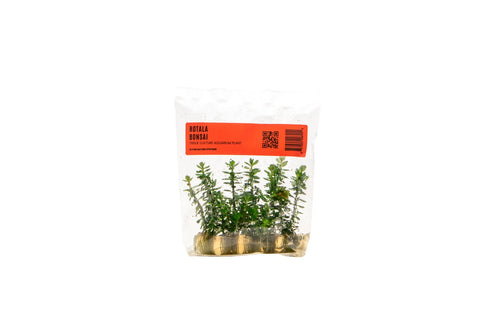 Rotala Bonsai TC Bag - BucePlant.com