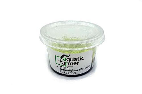 Rotala Rotundifolia PLATINUM Aquatic Farmer Tissue Culture