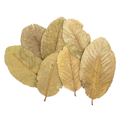 Tantora Dried Guava Leaves - 10 Pack