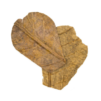 Tantora Nano Catappa Indian Almond Leaves - 15 Pack
