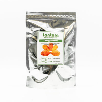 Tantora XL Catappa Indian Almond Leaves - 50 Pack - BucePlant.com