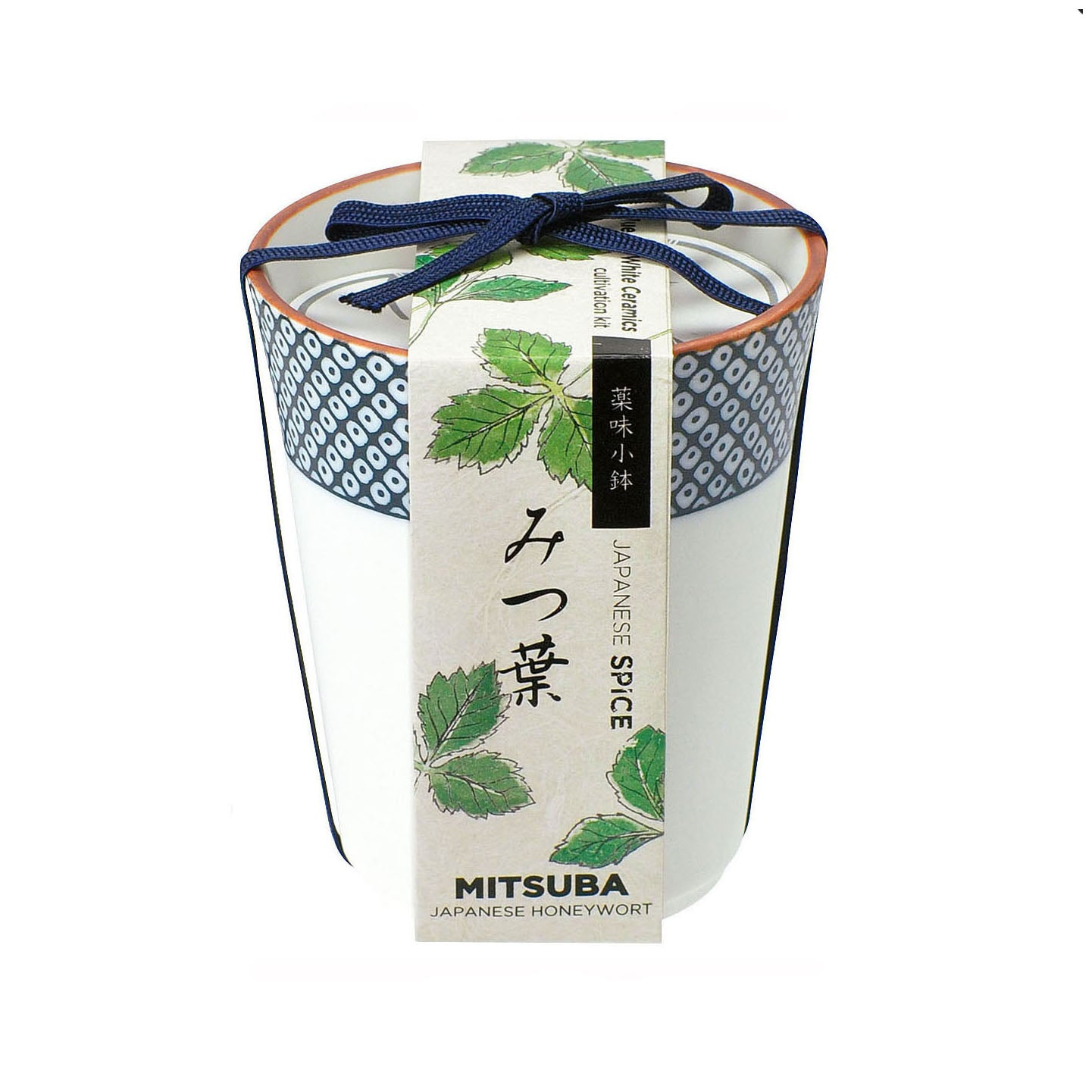 Grow Your Own Japanese Herbs Kit in a Ceramic Pot - Mitsuba(Japanese Parsley)