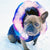 Allevamento del bulldog francese aka frenchie frenchiestore