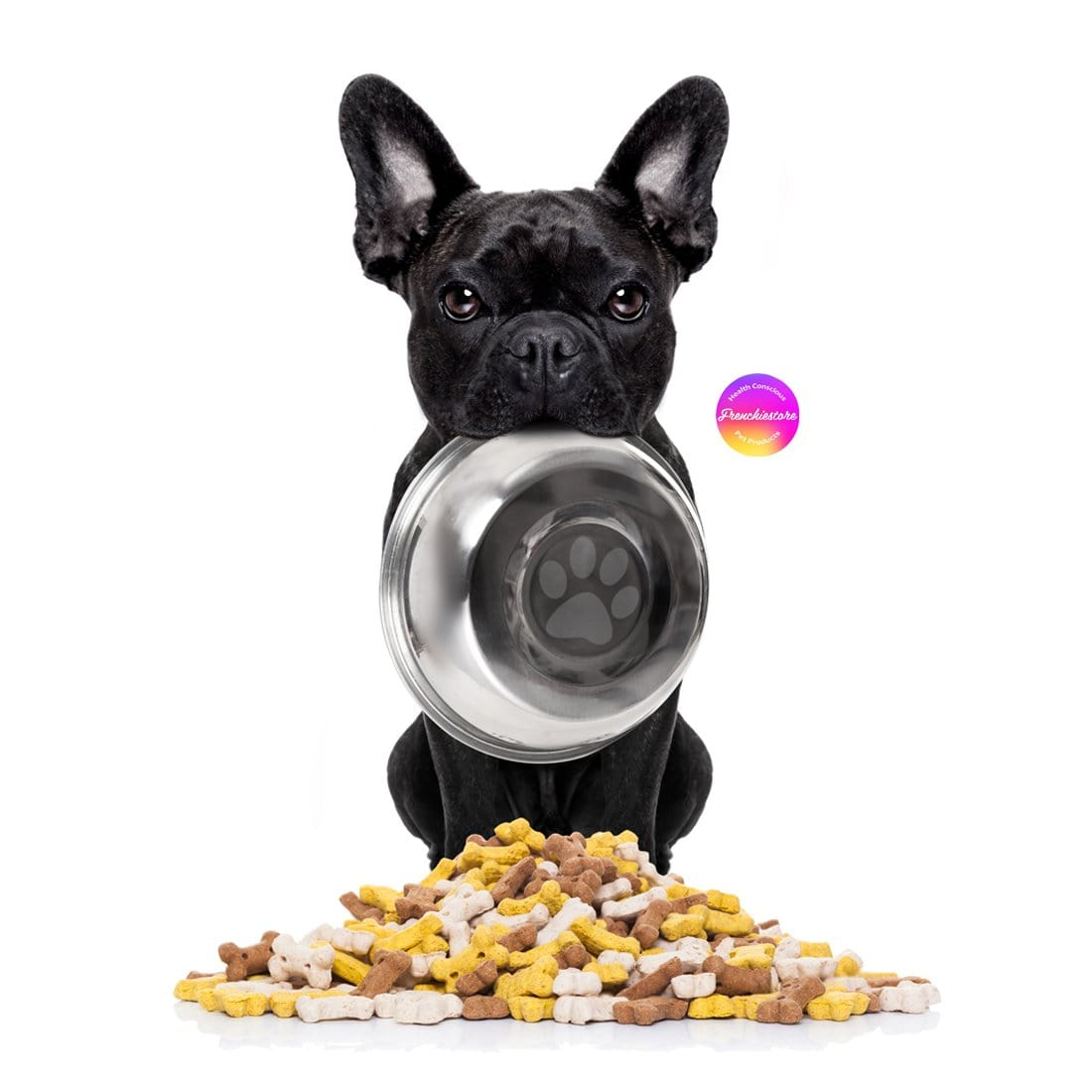 black Frenchie holding a food bowl in mouth