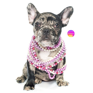 Rare color frenchie merle french bulldog