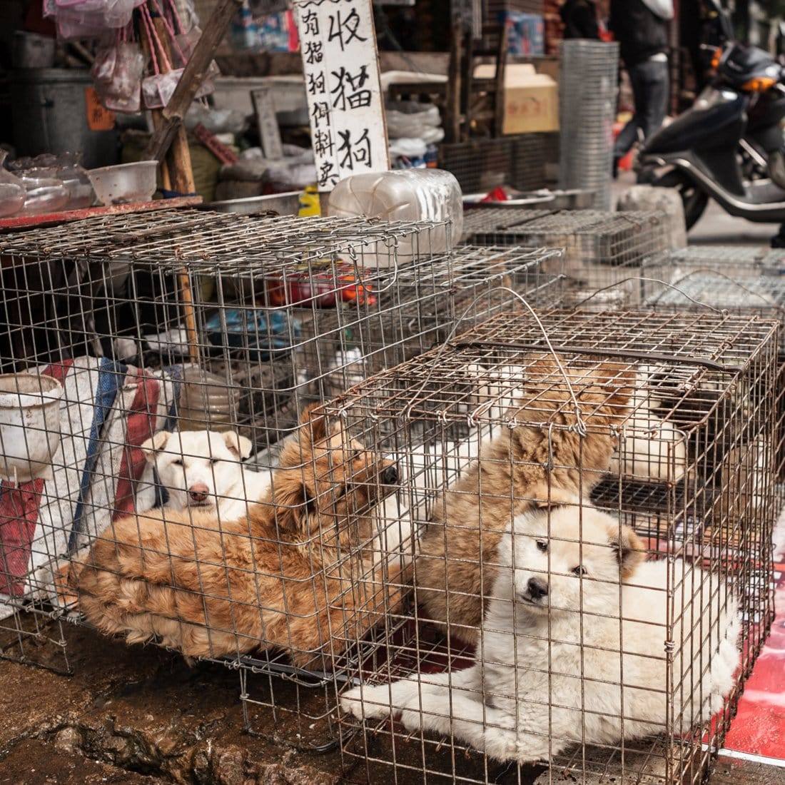dog Meat market china dogs in cages