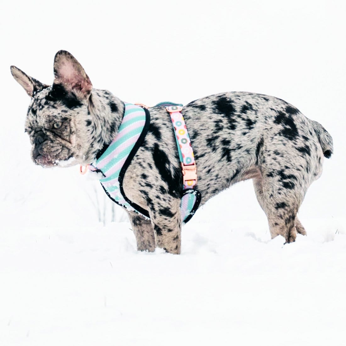 Best Frenchie products 2019