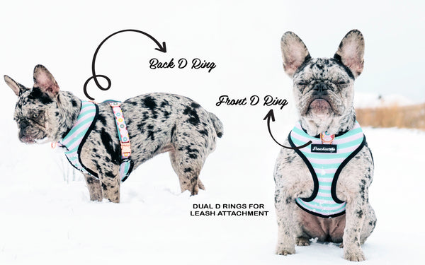 frenchie duo reversible harness