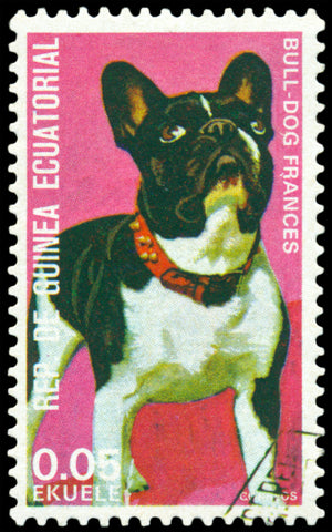A French Bulldog stamp printed by EQUATORIAL GUINEA series, circa 1974 history of the french bulldog