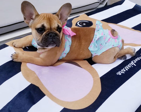 fawn french bulldog puppy on frenchiestore beach towel. Picture from 2017