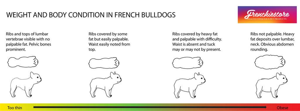 Frenchie weight and body condition of a french bulldog drawn by Frenchiestore