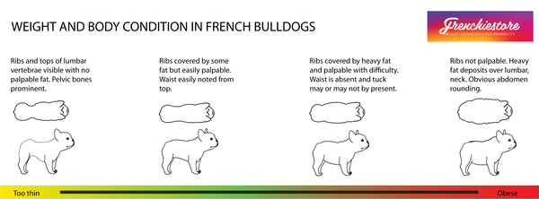 frenchie bulldog body condition ideales gewicht für frenchies