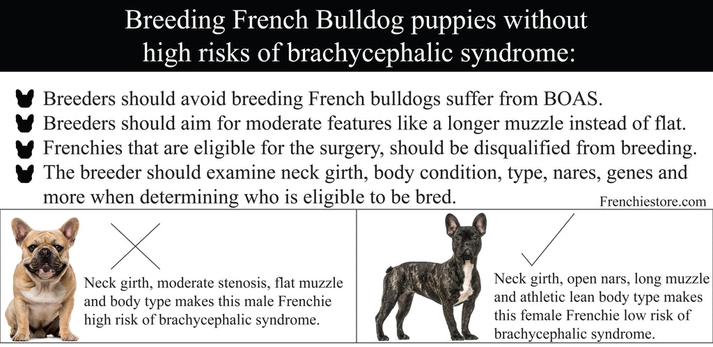 Breeding French Bulldog puppies without high risks of brachycephalic syndrome Frenchiestore.com