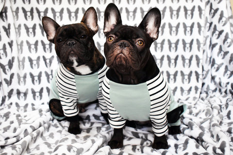 french brown frenchy bulldog frenchiestore french french vêtements