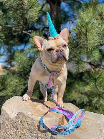 a unicorn frenchie looking magical frenchiestore best harness for french bulldogs