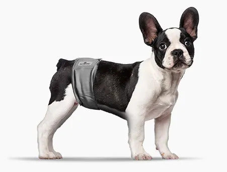 Dog Belly Bands for Male frenchie Dog might solve the issue