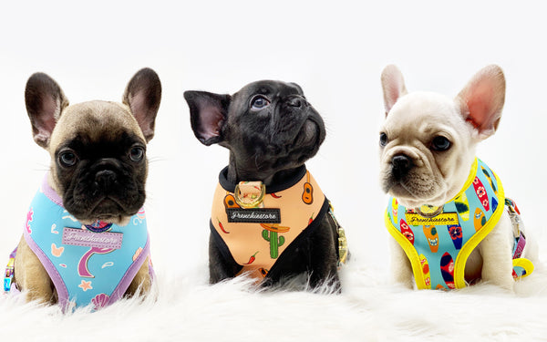 10% off your purchase when you pawscribe to our Frenchie Blog