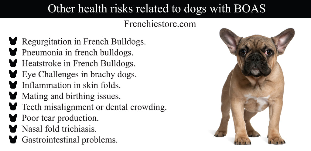 Other health issues related to dogs with BOAS such as French Bulldogs Frenchiestore.com