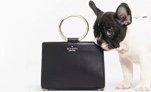 Kate spade french bulldog puppies frenchiestore
