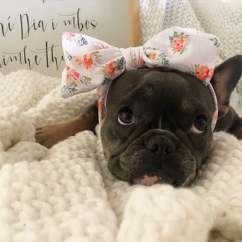 Frenchiestore Pet Head Bow | Sonnenseite