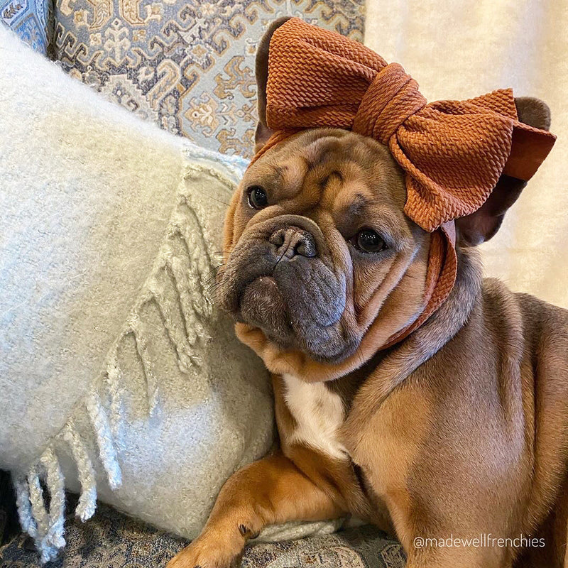 Frenchiestore Pet Head Bow | Camello