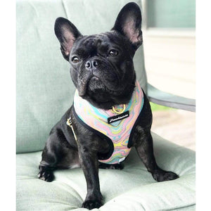 black frenchie wearing best frenchie harness pink marble design made by frenchie store