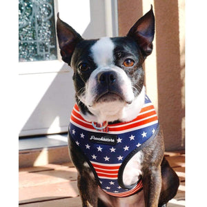 Boston Terrier dog wearing usa dog harness with dual d rings