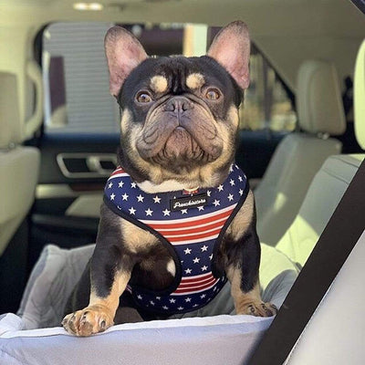 Chocolate tan French Bulldog wearing Frenchiestore dog health harness in united states patriotic colors