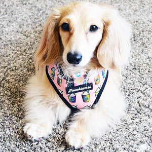 Dachshund dog wearing frenchiestore pink starbucks harness