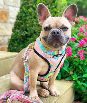 Frenchiestore Versatile Health Harness | Pink Lemonade