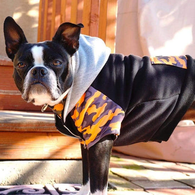 Boston Terrier dog modeling best dog hoodie made by frenchiestore