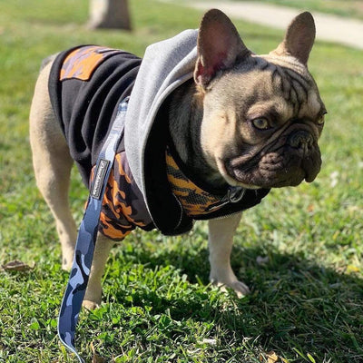 FRENCHIE BULLDOG WALKING IN FELPA CON CAPPUCCIO E GUINZAGLIO FRENCHIESTORE