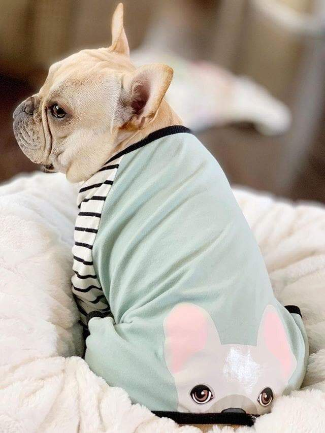 French Bulldog Pajamas | Frenchie Clothing | Cream Frenchie dog, Frenchie Dog, French Bulldog pet products