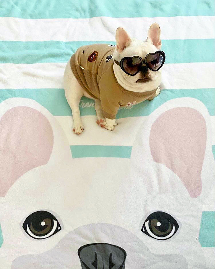 White French Bulldog on Aqua Stripes | Frenchie Blanket