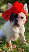 Frenchiestore Pet Head Bow | rot