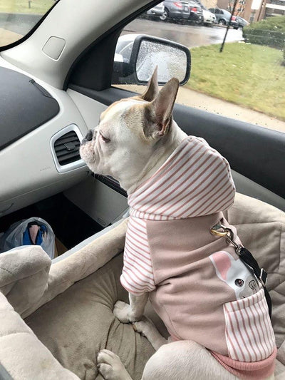 Frenchie dog clothes