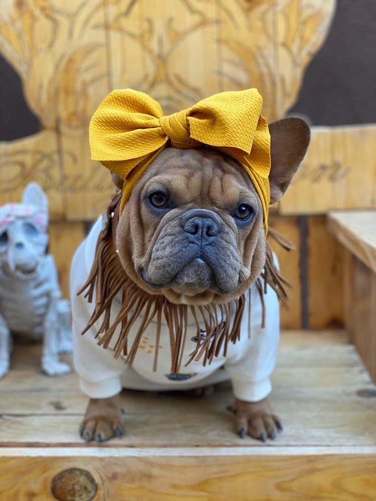 Frenchiestore Pet Head Bow | Mustard