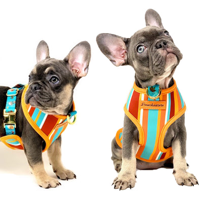 Safe French Bulldog puppy harness